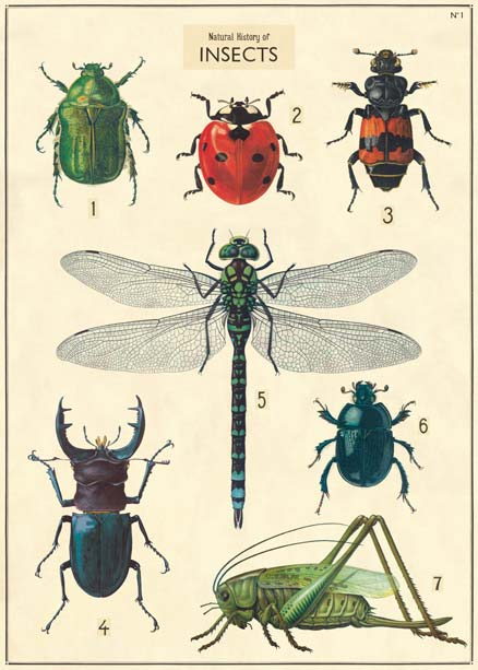 Goldfisch historische Poster Insekten insects